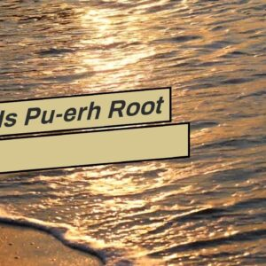 What Is Pu-erh Root