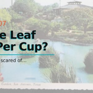 Loose Leaf Tea Per Cup?